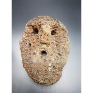 Rare Masque en corail du Timor Oriental